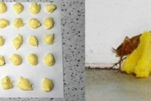 Combinația de ou și acid boric elimină gândacii de bucătărie