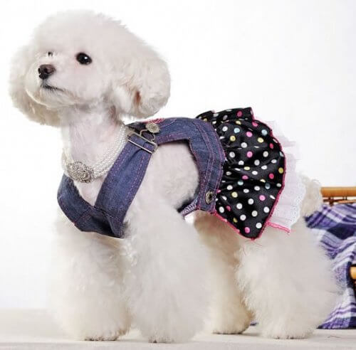Îmbracă-ți animalul de companie cu hăinuțe confecționate din blugii vechi
