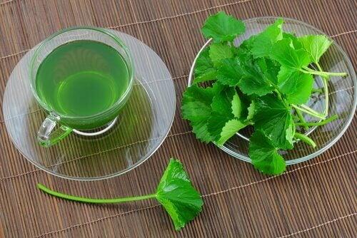 Ceaiul de pătrunjel ameliorează colita ulcerativă