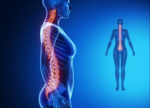 Coloana vertebrală și organele interne influențează sănătatea corpului