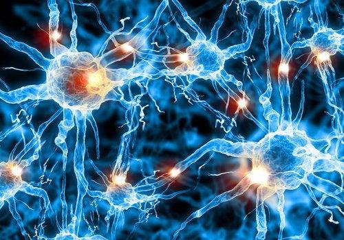 Creierul uman poate fi antrenat cu diverse exerciții