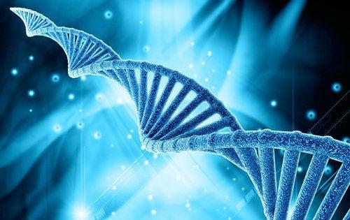 Grăsimea abdominală poate fi cauzată de factori ereditari