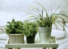 Următoarele 6 plante sunt perfecte pentru dormitorul tău