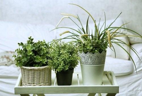 Cele mai bune plante pentru dormitor