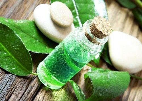 Remedii naturale împotriva păduchilor precum uleiul de arbore de ceai