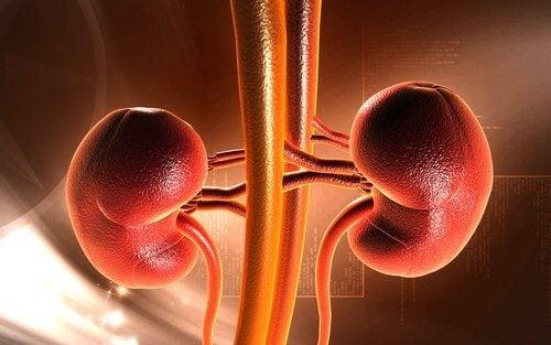Dacă te abții de la urinat, poți dezvolta pietre la rinichi