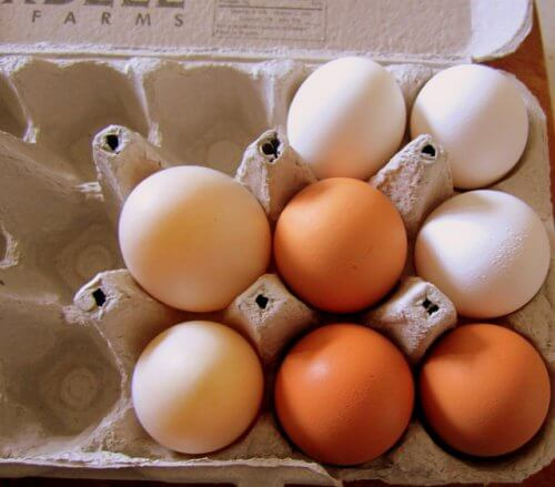 Cofrajele de ouă reutilizate în gospodărie