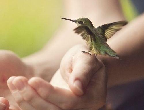 Detașarea emoțională: o formă de integritate personală