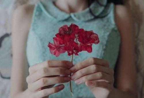 Floare care reprezintă ce este modestia