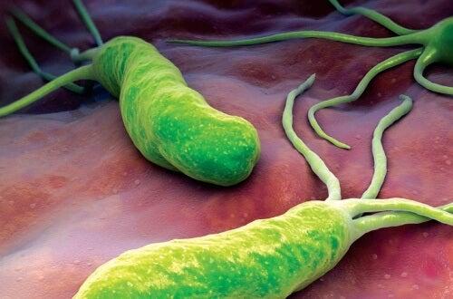 Helicobacter pylori, bacteria care afectează digestia