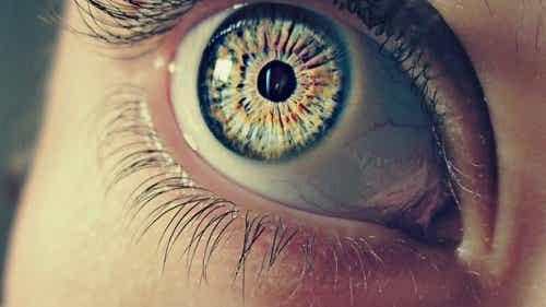 Pupila – 7 informații surprinzătoare