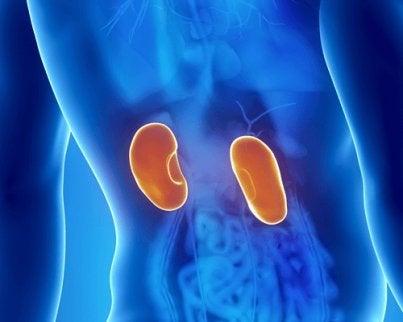 Tulburările renale sunt consecințele frecvente ale deshidratării