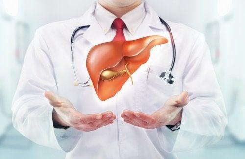 Alimente care fortifică ficatul și importanța acestuia