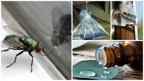Poți alunga muștele cu produse naturale