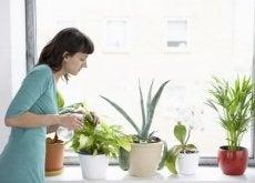 Anumite plante ajută la purificarea aerului din casăp