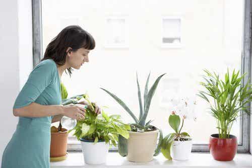 8 plante care ajută la purificarea aerului din locuință