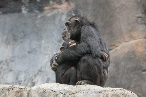 Îmbrățișările sunt prezente și în lumea animalelor