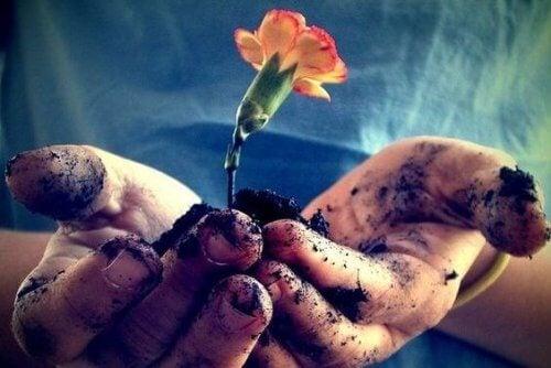 Dragostea este ca o floare ce trebuie îngrijită zilnic