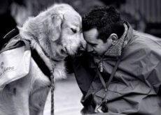 Câinii îți pot alina dorul de o persoană dragă