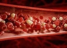 Circulația sanguină joacă un rol important în organism