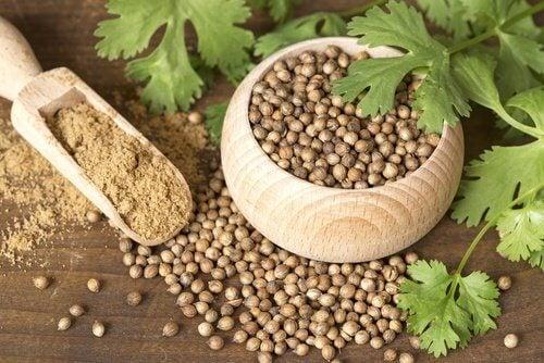 Și semințele de coriandru sunt utile pentru a trata hemoroizii