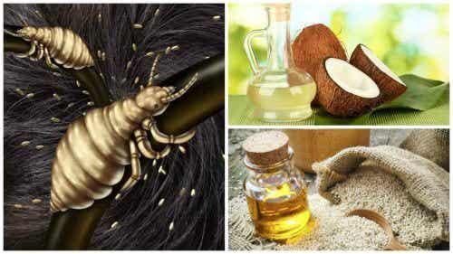 Elimini păduchii cu 5 remedii naturale