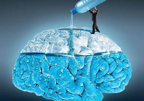 Apa este esențială pentru creierul uman