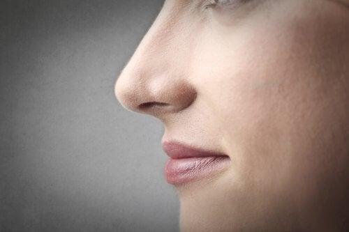 Cum determină genele aspectul nasului