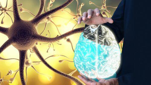 Nervul vag: cum și de ce ar trebui să îl stimulezi
