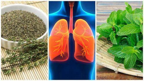 Anumite plante medicinale îți însănătoșesc plămânii