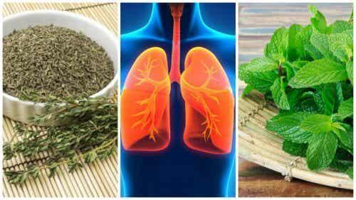 8 plante care îți mențin plămânii sănătoși