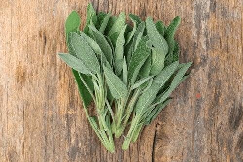 Salvia îți menține plămânii sănătoși