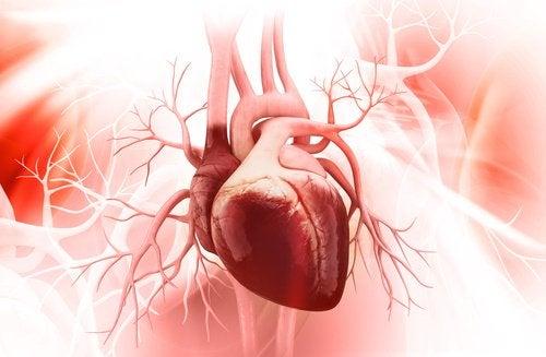 Sucul de merișoare îți protejează inima