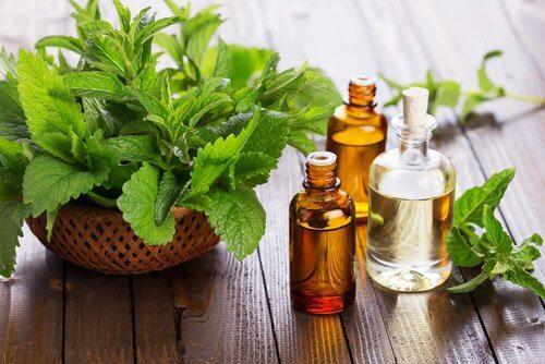 Tratamente naturiste pentru aftele bucale precum uleiul de mentă