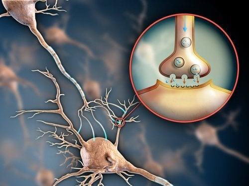 Întărirea sistemului nervos cu remedii naturale