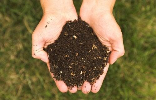 Nivelul de bază al piramidei alimentare include produse esențiale