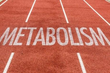 Cum functioneaza metabolismul si cum acceleram arderile
