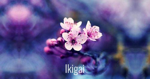 7 cuvinte japoneze care susțin dezvoltarea personală