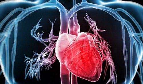 Merele cu solzi îmbunătățesc sănătatea inimii