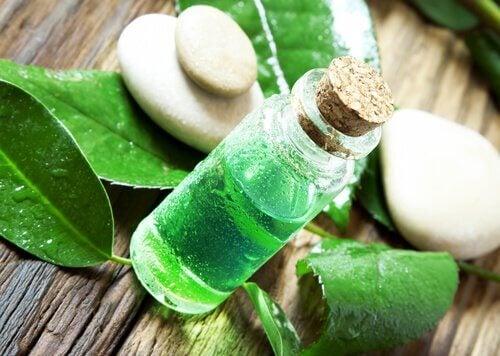Remedii naturiste împotriva păduchilor cu ulei de arbore de ceai