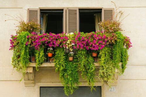 Plante cățărătoare pentru a crea o mini-grădină pe balcon