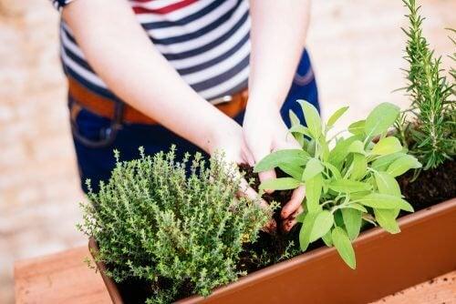 Idei pentru a crea o mini-grădină cu plante aromatice