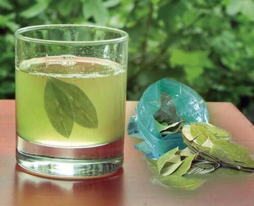 Dizolvarea pietrelor la rinichi cu frunze de avocado