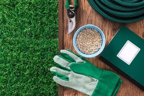Grădină amenajată pentru a crește un afin la tine acasă