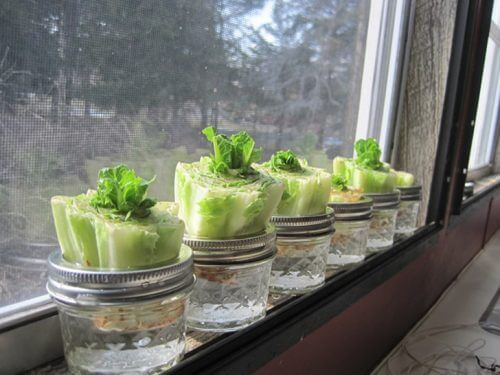 Legume care pot fi recultivate ca salata verde