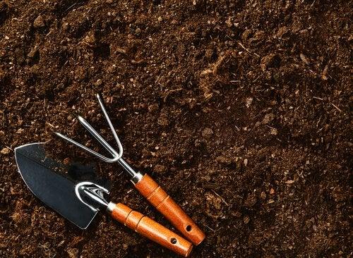 Pământ special pentru a crește un afin la tine acasă