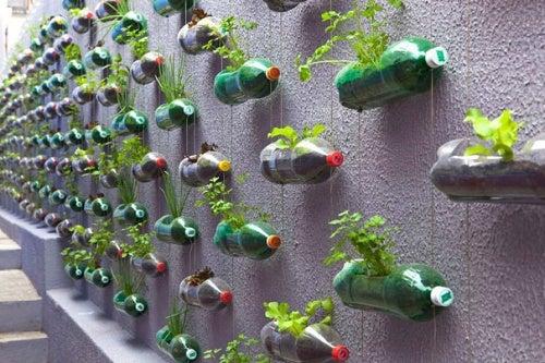 Reciclarea sticlelor de plastic într-o grădină specială