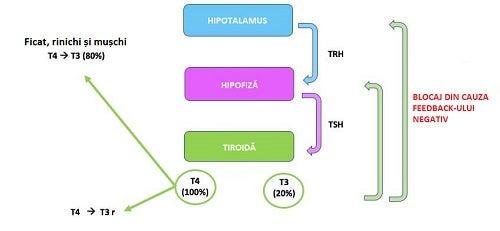 Tipuri de hipotiroidism ce afectează organele