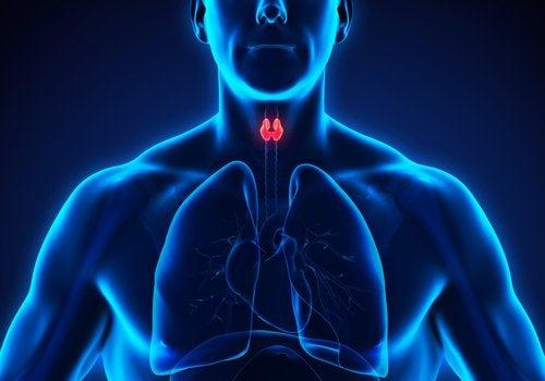 Tipuri de hipotiroidism și glanda afectată