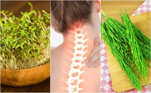 7 plante medicinale benefice pentru sistemul osos